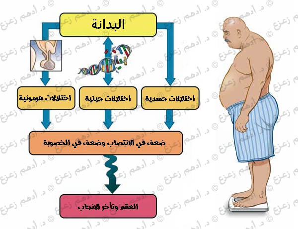 البدانة تؤثر سلبا على الخصوبة