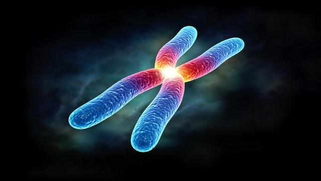 الفحص الشامل للكروموسومات (CCS)