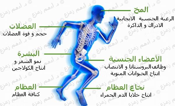 انخفاض التستوستيرون و أثره علي الخصوبة